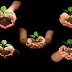 planter entre les mains — Photo