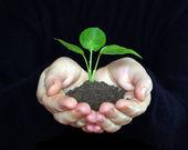 Plant — Stock Photo
