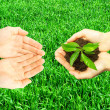 Plant in hands — Stock Photo #2337011