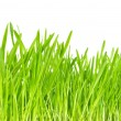 Green grass — Stock Photo #2338239