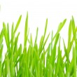 Green grass — Stock Photo #2488949