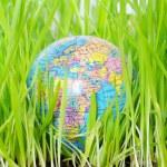 Globe in grass — Stock Photo #2631254