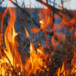 Stock Photo: Forest fire