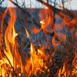 Forest fire — Stock Photo #1008061