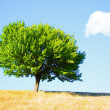 albero — Foto Stock