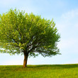 Tree — Stock Photo #1008733