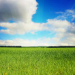 Grassland — Stock Photo #1008945