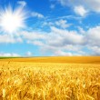 Stock Photo: Agriculture landscape