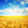 Agriculture landscape — Stock Photo #1009451