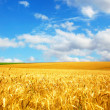 Agriculture landscape - Foto Stock
