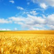 Agriculture landscape - Stock Photo