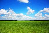 Landschap — Stockfoto