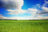 Vackert landskap — Stockfoto