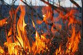 Pożar lasu — Zdjęcie stockowe