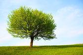 Tree — 图库照片