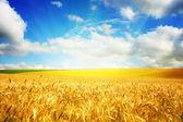 Paisagem da agricultura — Foto Stock