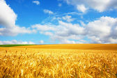Paisaje agrícola — Foto de Stock