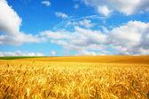 Panorama di agricoltura — Foto Stock