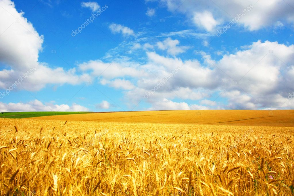 Agriculture landscape  Stock Photo #1009462