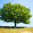 Stock Photo: Tree