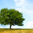 Tree — Stock Photo #1010208