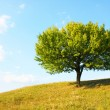 Stock Photo: Lonely tree