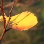 Autumn leaves — Stock Photo #1010314
