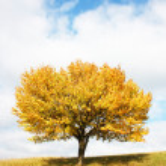 Lonely autumn tree — Stock Photo #1010423