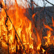 Forest fire — Stock Photo #1013906