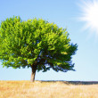 Tree — Stock Photo #1014118