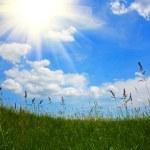 gras und himmel — Stockfoto