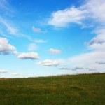 Grassland — Stock Photo #1016949