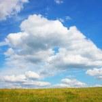 Grassland — Stock Photo #1017180
