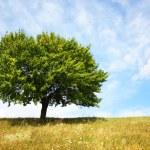 drzewo — Zdjęcie stockowe #1017238