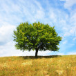 Tree — Stock Photo #1017277