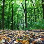 Woods — Stok fotoğraf