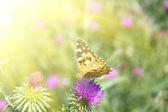 Mariposa — Foto de Stock