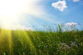 Gras en hemel — Stockfoto