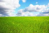 Użytki zielone i niebieskie niebo — Zdjęcie stockowe