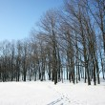Winter scene — Stock Photo #1706383