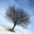 Stock Photo: Lonely winter tree