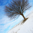 Lonely winter tree — Stock Photo #1871200