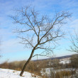 Lonely winter tree — Stock Photo