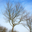 lonely winter baum — Stockfoto #1871834