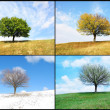 Alone tree in for season - Stock Photo