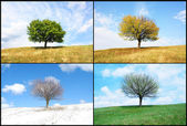 Alone tree in for season — Stock Photo