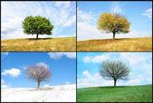 单树中的季节 — 图库照片