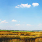 Beautifully summer landscape — Stock Photo