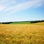 Beautifully summer landscape — Stock Photo #2490062