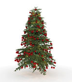 Christmas tree fir isolated — Stock Photo